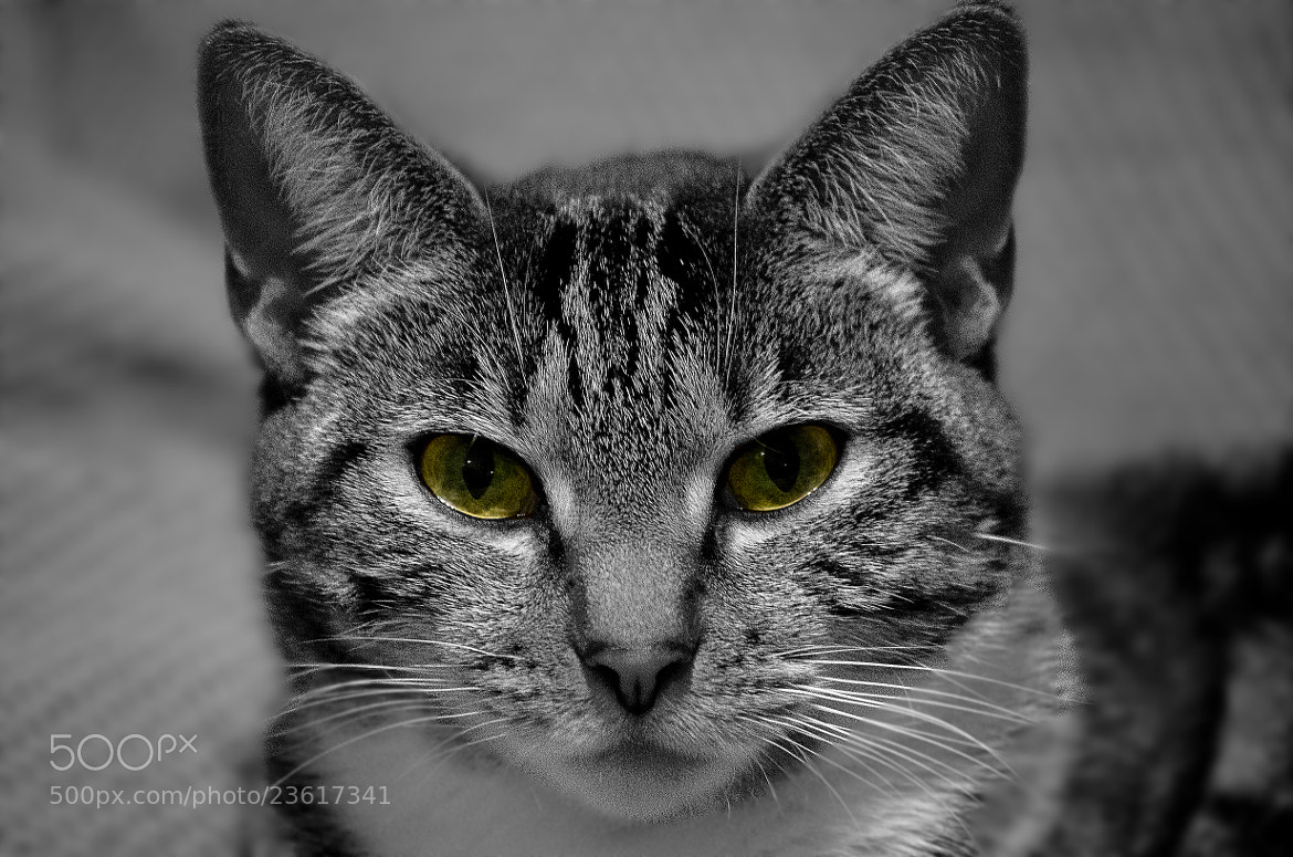 Photograph Mitzy stare by Joseph Kolbe on 500px