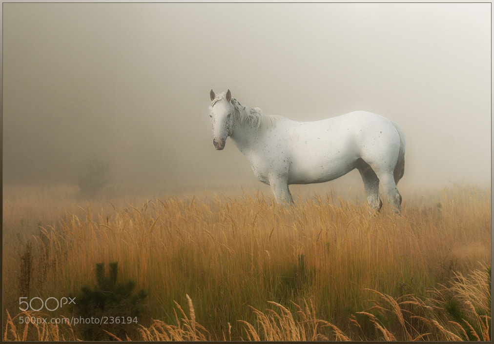 Photograph Horse by Vadim Trunov on 500px
