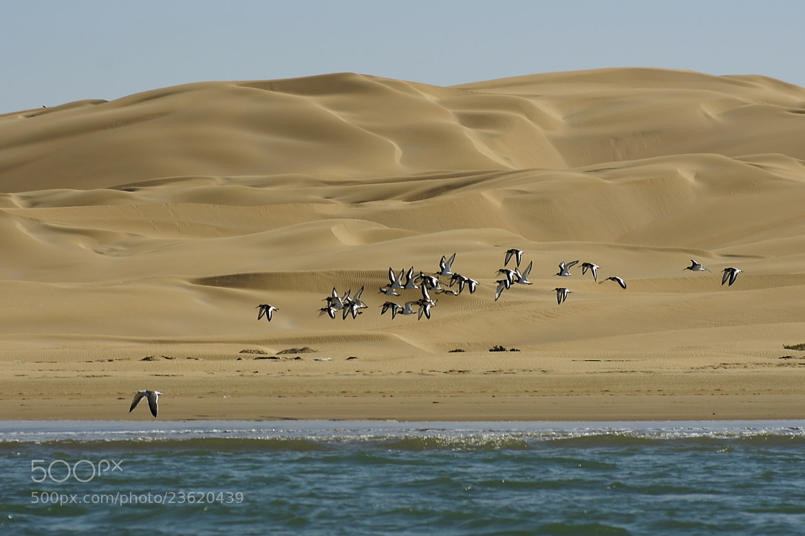 Photograph Scene from West Sahara by Branko Frelih on 500px