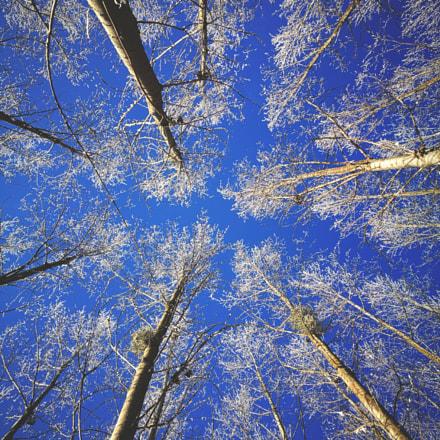 trees top
