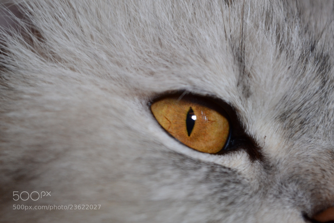 Photograph cat eye by Mohamed El Borgy on 500px