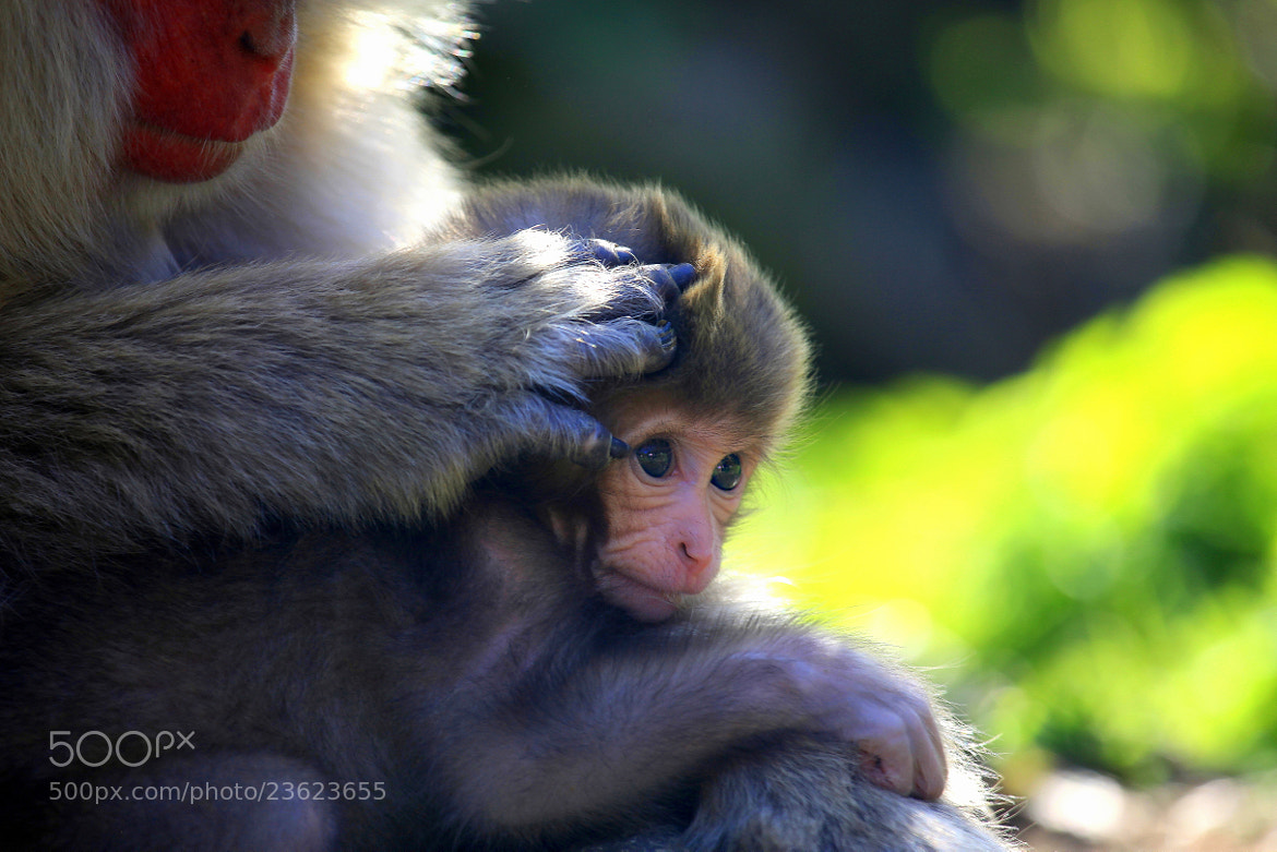 Photograph Affection by yume . on 500px