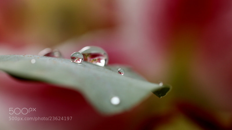 Photograph Douceur by Sonia Preuss Gambier on 500px