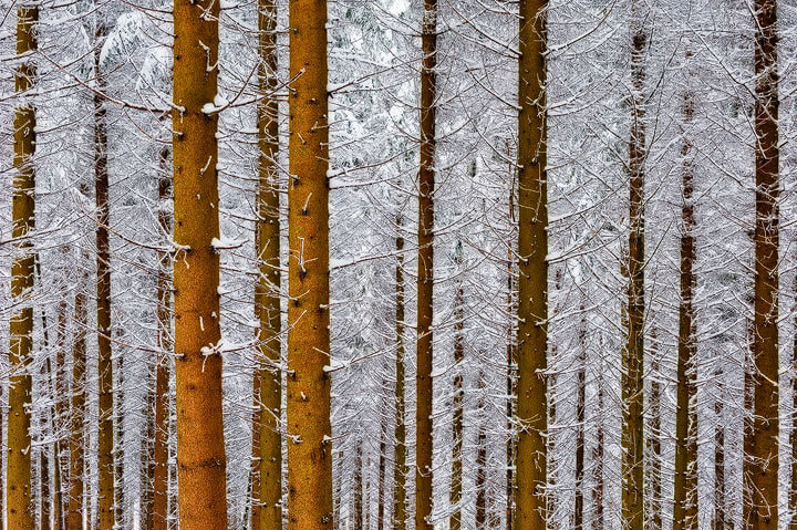 """Photograph Winterwald by Roland """"Bill"""" Moser on 500px"""