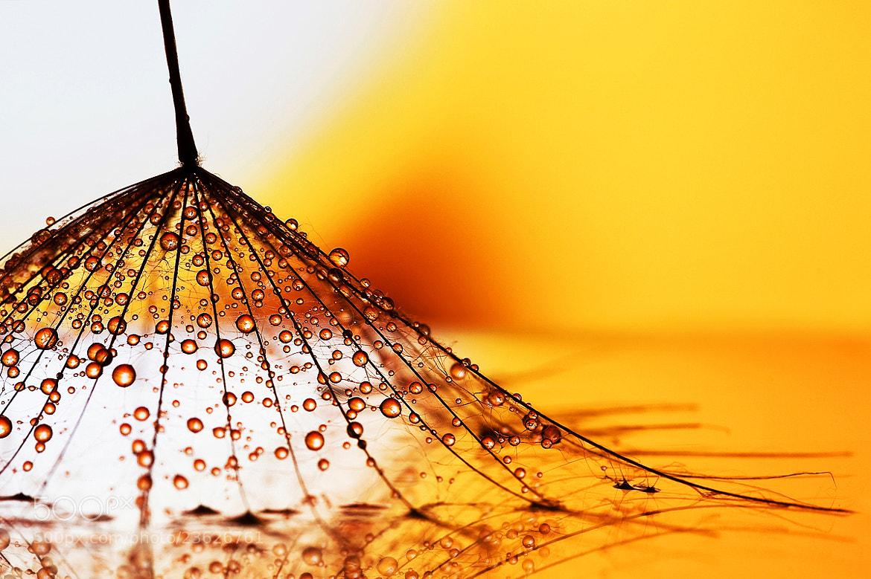Photograph Light broom by Marcsi Kesjarne on 500px