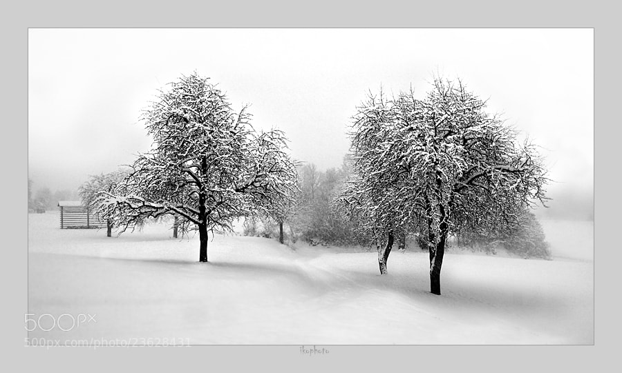 Photograph winter by branepovalej on 500px