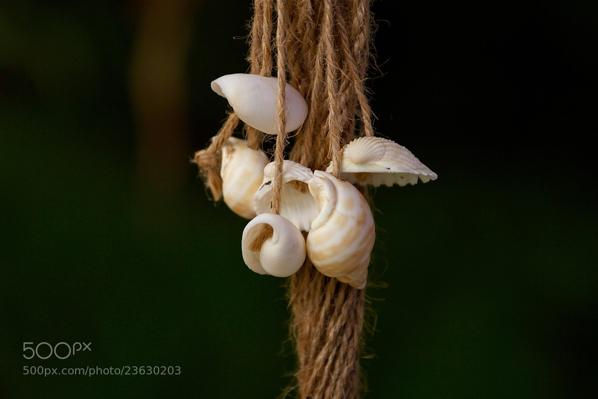 Photograph The Shells.. by MondoPhotography . on 500px