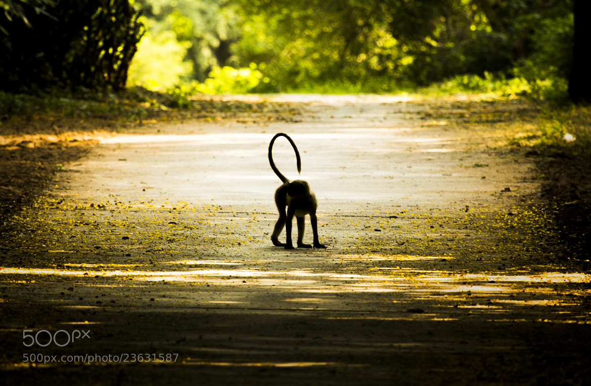 Photograph Monkey  by Akshun Babbar on 500px