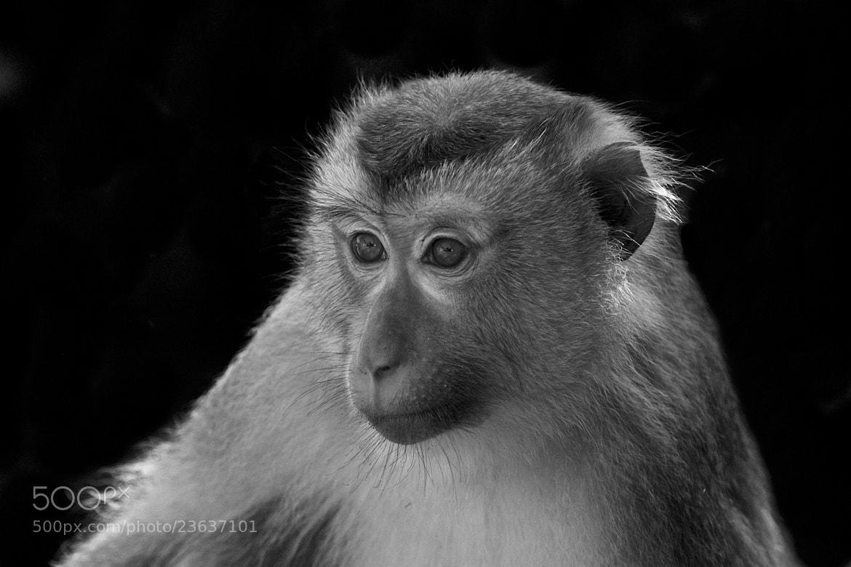 Photograph Monkey by Uli Poetsch on 500px