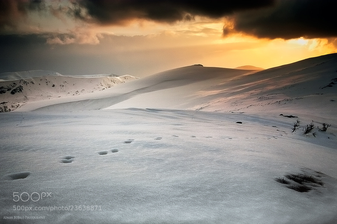 Photograph Traces in the Snow by Adnan Bubalo on 500px