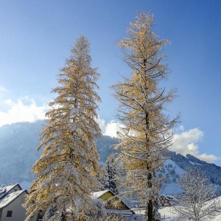 early winter II