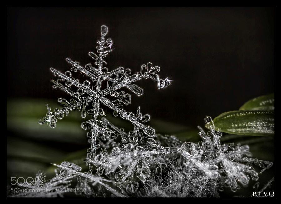 Photograph Snowflake 1 by Jaroslava Melicharová on 500px