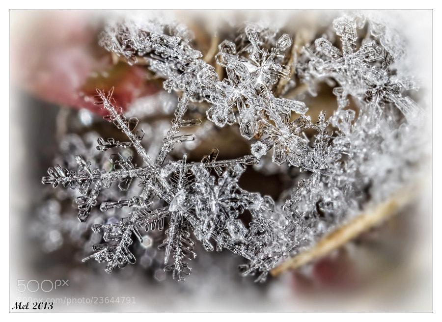 Photograph Snowflake 3 by Jaroslava Melicharová on 500px