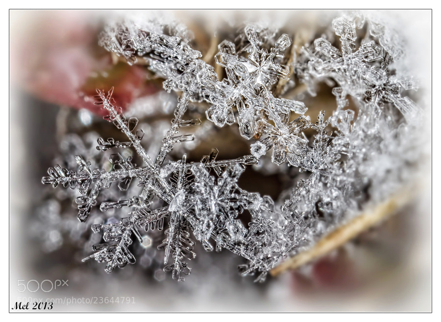Photograph Snowflake 3 by Jaroslava Melicharová on 500px
