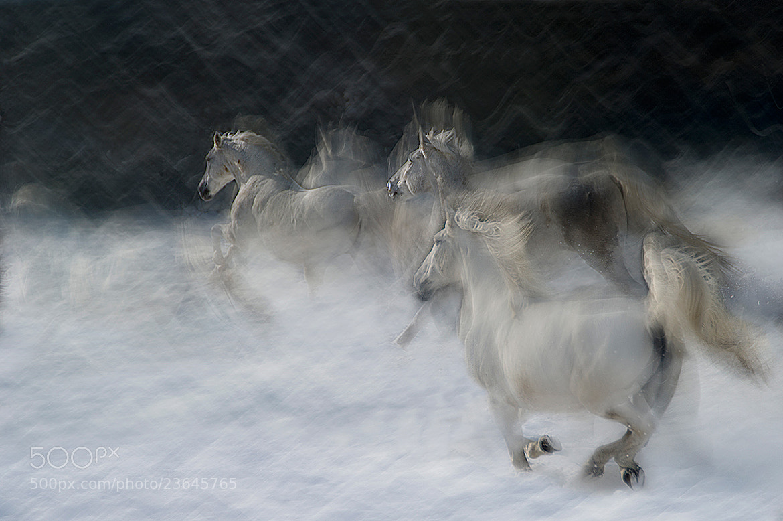 Photograph Winter scene by Milan Malovrh on 500px