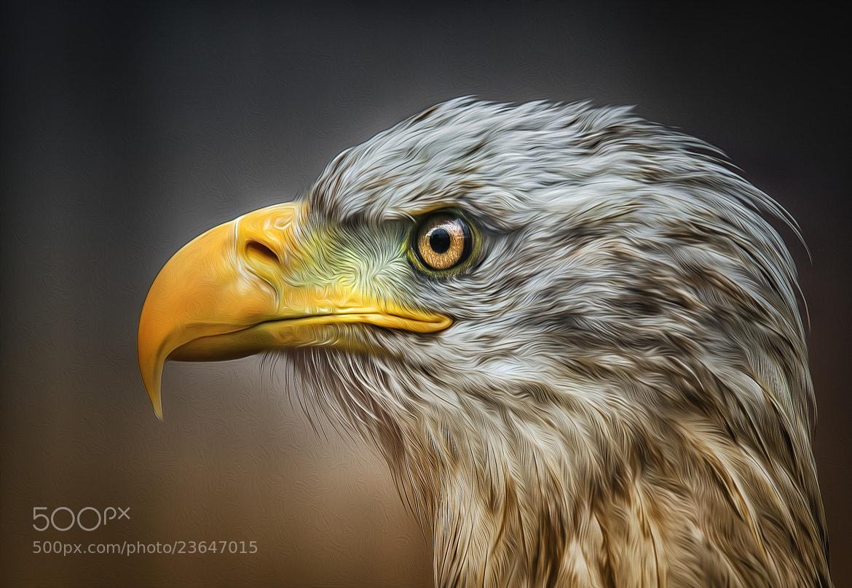Photograph eagle no. 3 by Detlef Knapp on 500px