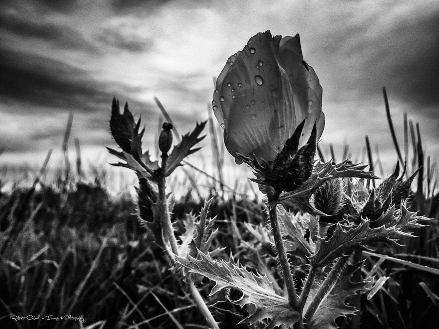 Al amanecer en Blanco y Negro de Roberto Cabral │Image & Photography en 500px.com