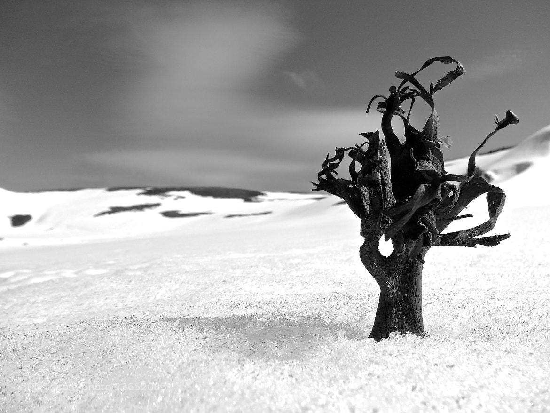 Photograph Antarctic Tree by JON TJADER on 500px
