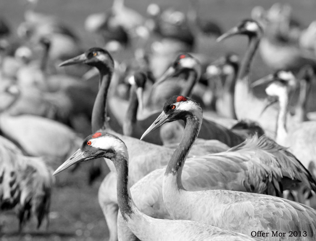 Photograph Cranes by Offer Mor on 500px