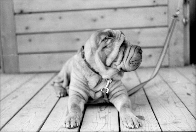 Photograph Puppy by Igal schneider on 500px