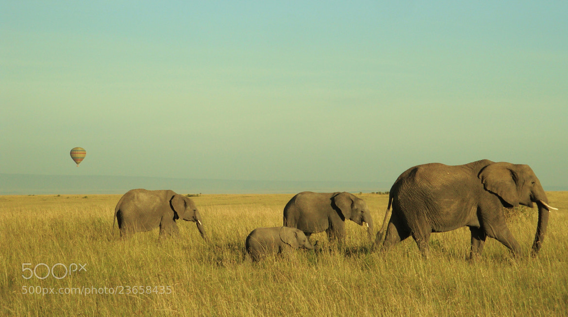 Photograph Family Walk by JON TJADER on 500px