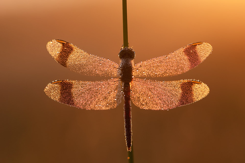 Photograph Pearls in the morning by Tom  Kruissink on 500px