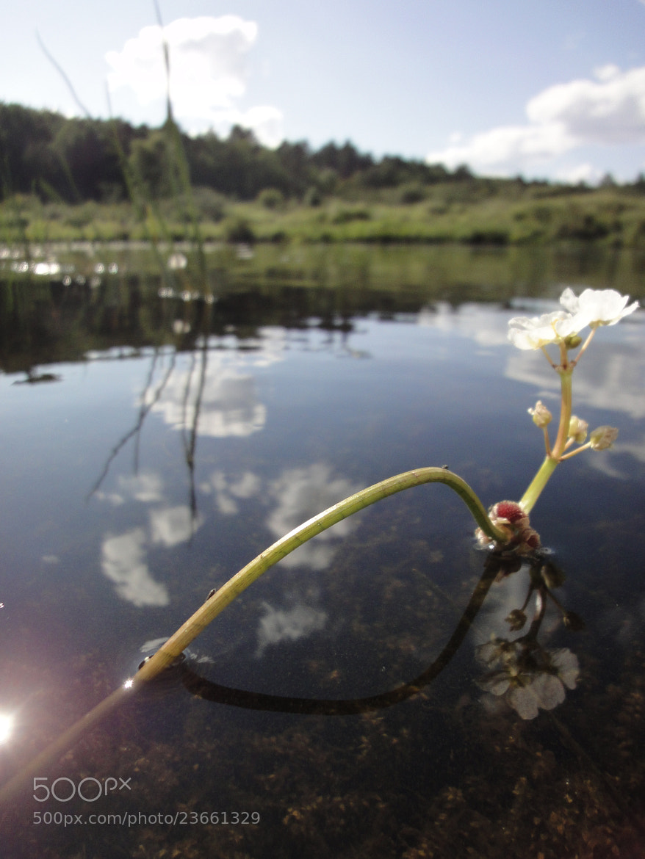 Photograph Namekagon Reflective by JON TJADER on 500px