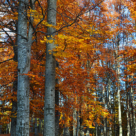 Autumn trees by Mihaela Floriana Soare (MichaelaS)) on 500px.com