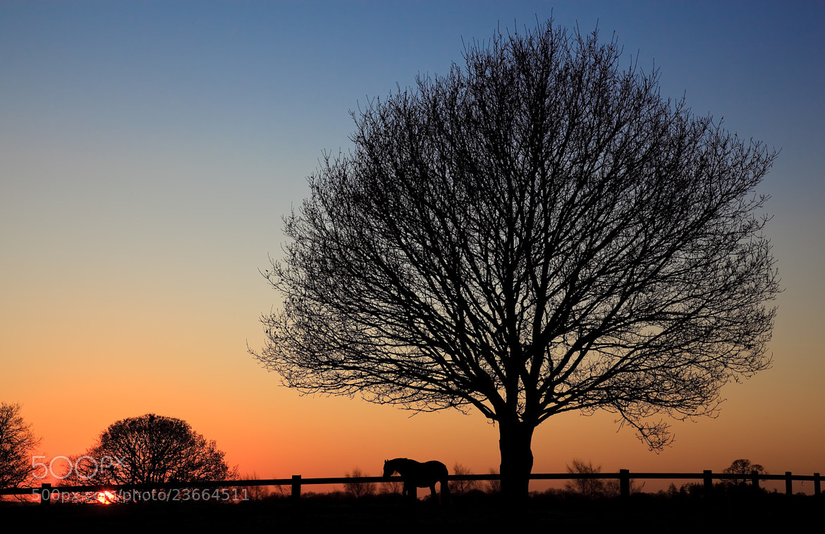 Photograph Sunset Silhouette by Steve Vincent on 500px