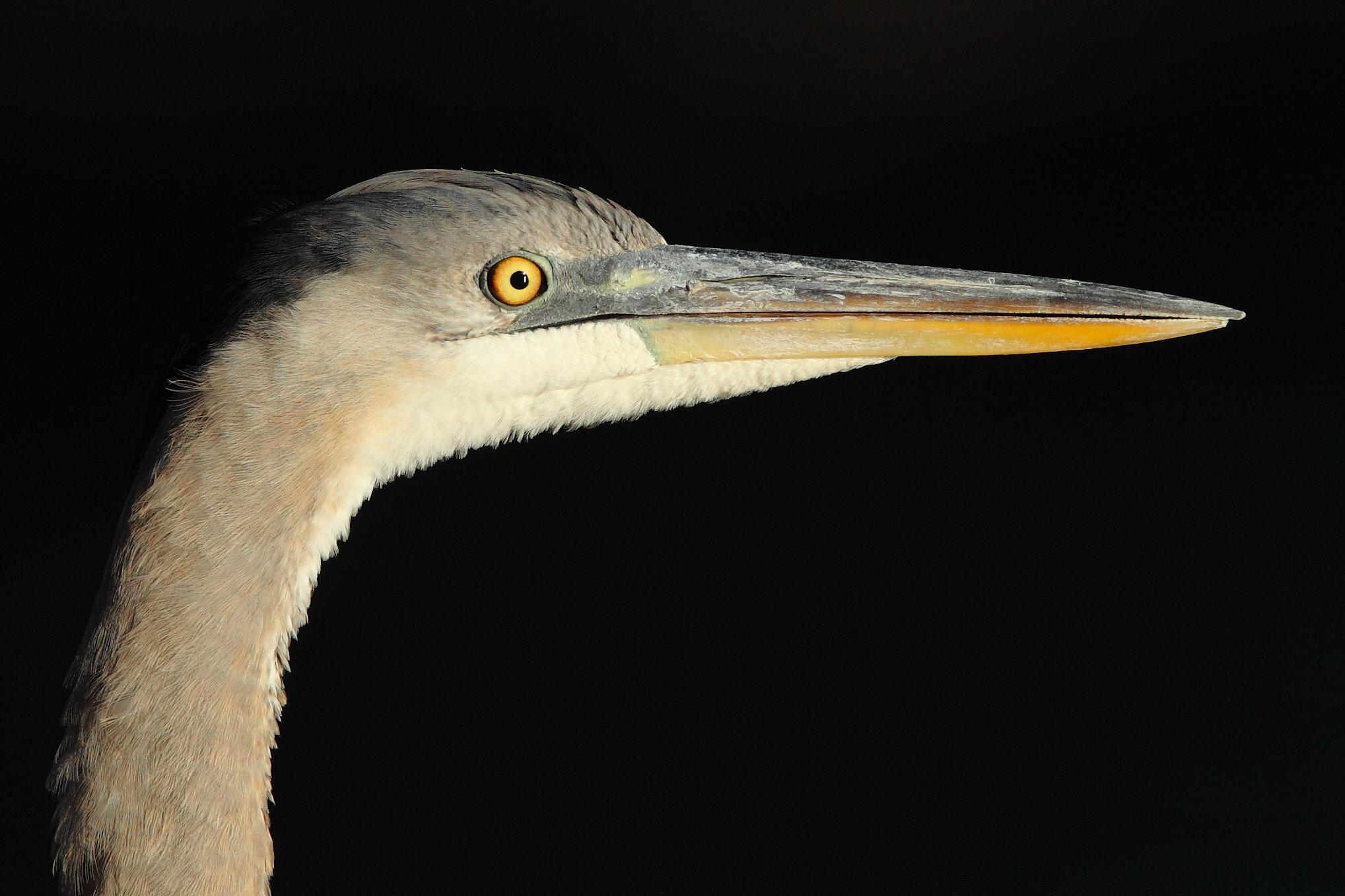 Photograph GBH Portrait by Chim Co on 500px