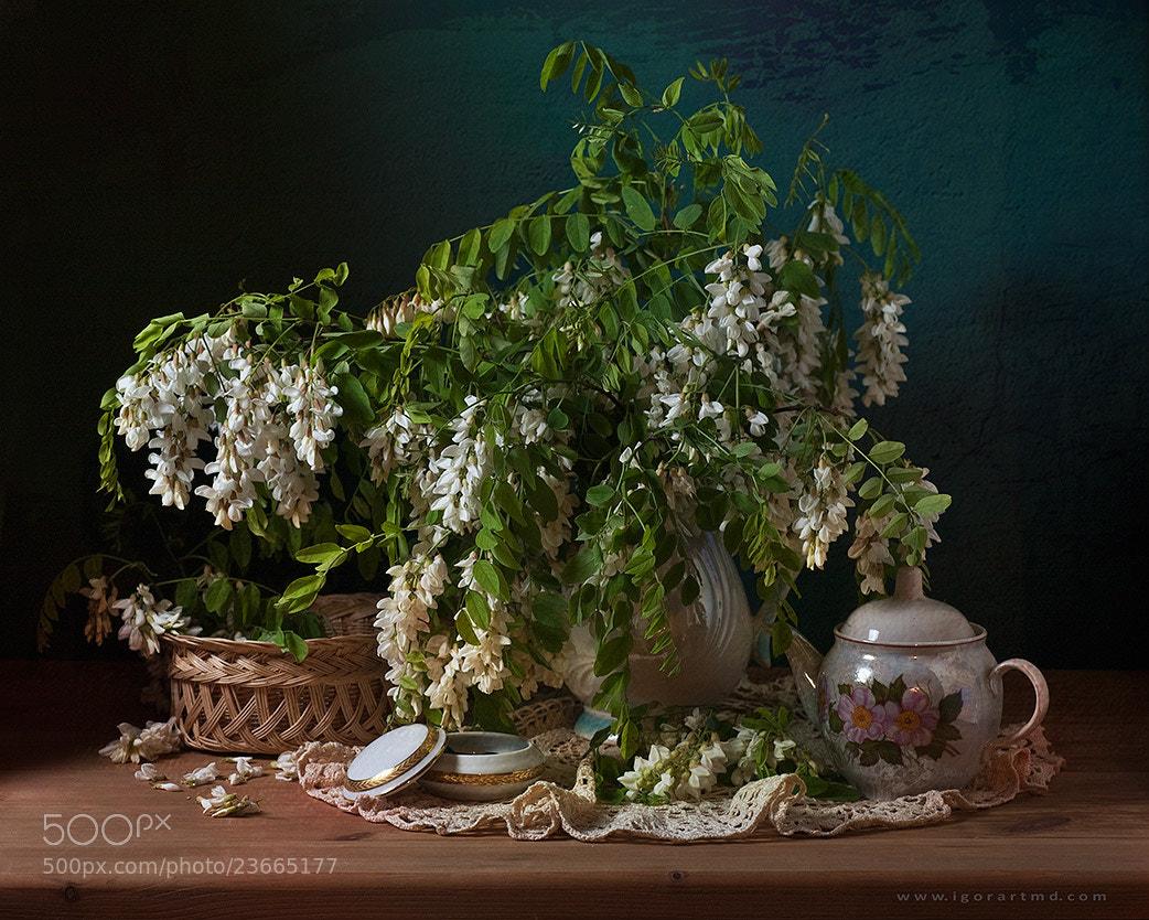 Photograph Acacia by Igor Sirbu on 500px