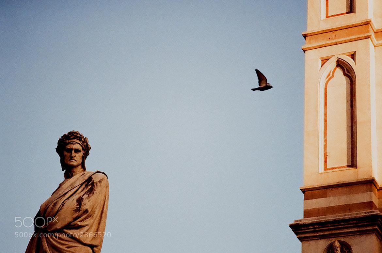 Photograph Pigeon terrorist, Dante Alighieri unmoved by Riccardo Marsilio on 500px