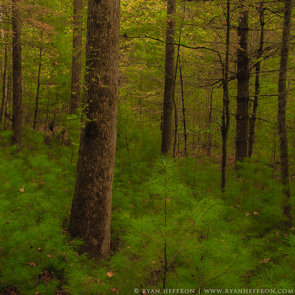 Photograph The Woods by Ryan Heffron on 500px