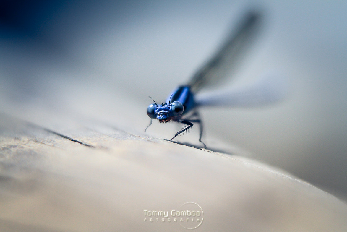 Photograph Supernatural by Tommy Gamboa Flores on 500px