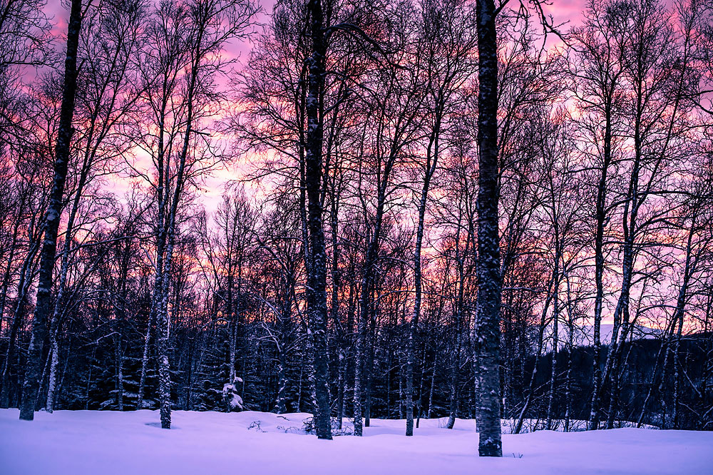 Photograph Sunset in the winter forest by Frode Abrahamsen on 500px