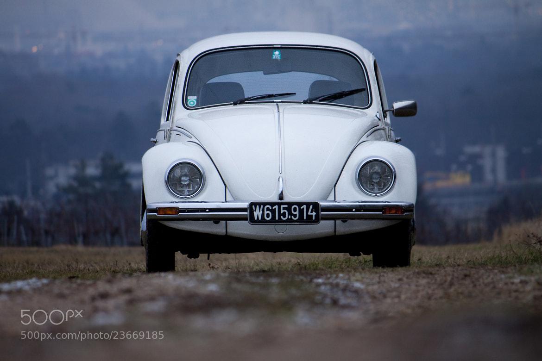 Photograph Beetle - Käfer by Andreas Blöschl on 500px