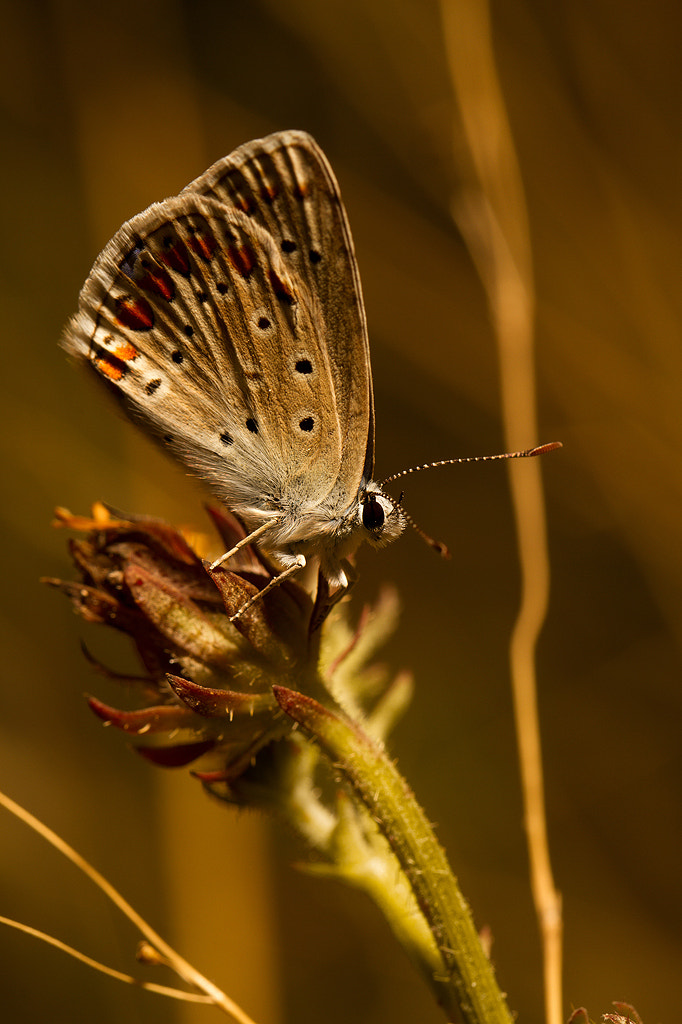 Photograph Butterfly by Julian AMIEVA on 500px