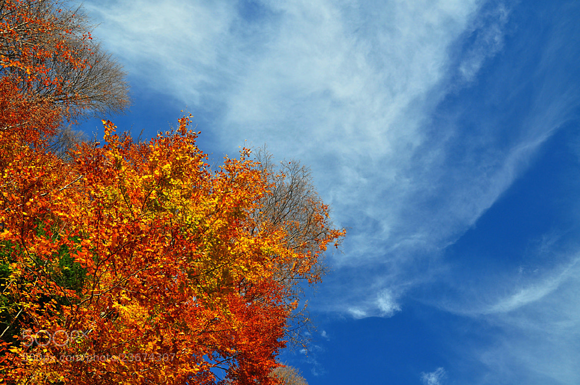 Photograph Blue sky vs autumn colours by Mihaela Floriana Soare on 500px