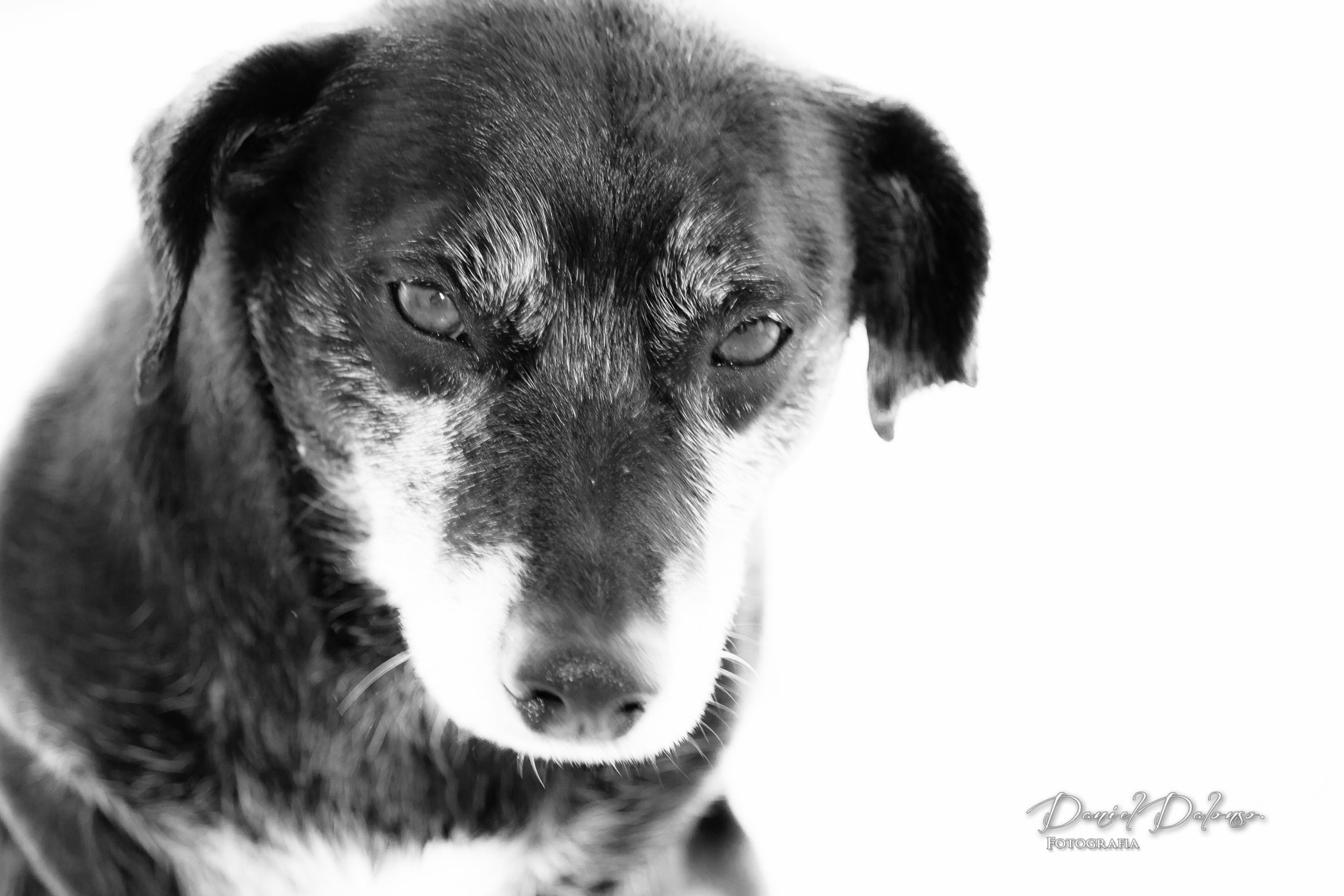 Photograph Murphy B&W by Daniel Dalonso on 500px