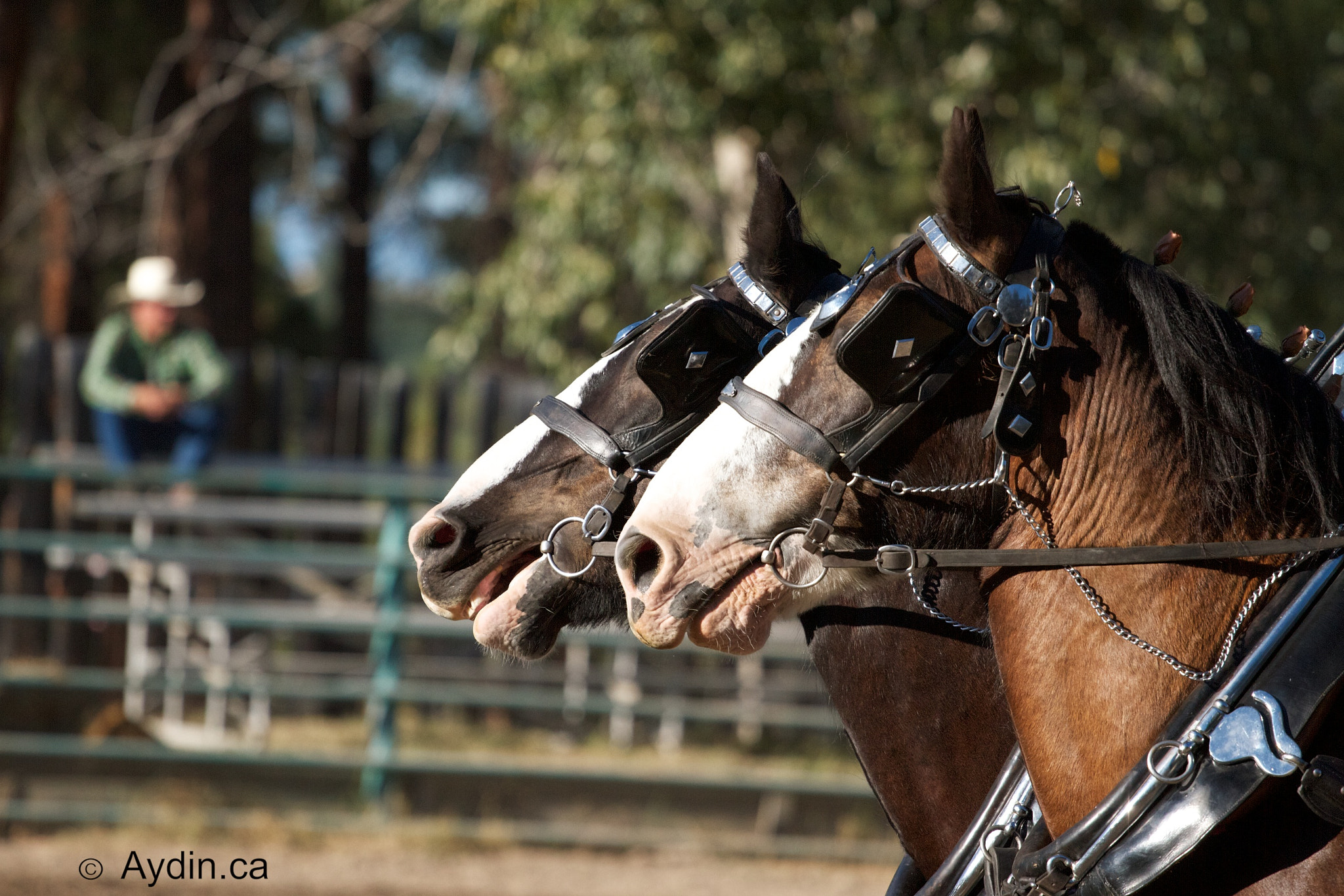Photograph Horse at Rodeo by Aydin Odyakmaz on 500px