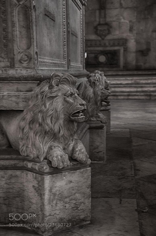 Photograph Alexandro Herculano tomb by Miza Monteiro on 500px
