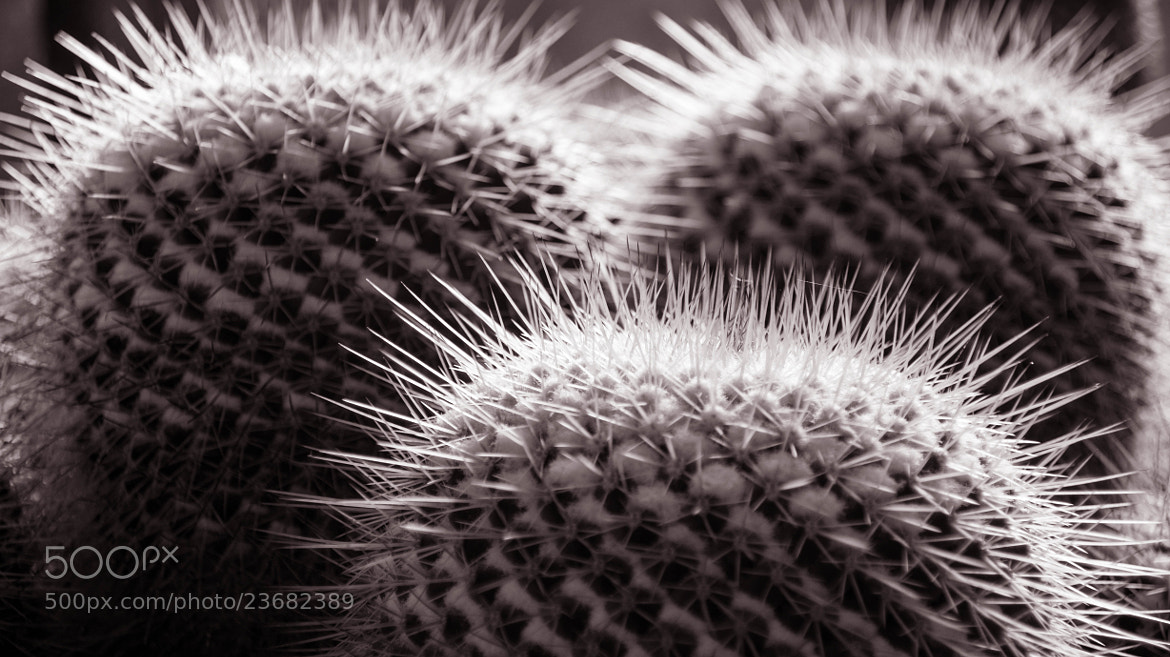 Photograph Cactus Patterns II by Erik Anderson on 500px