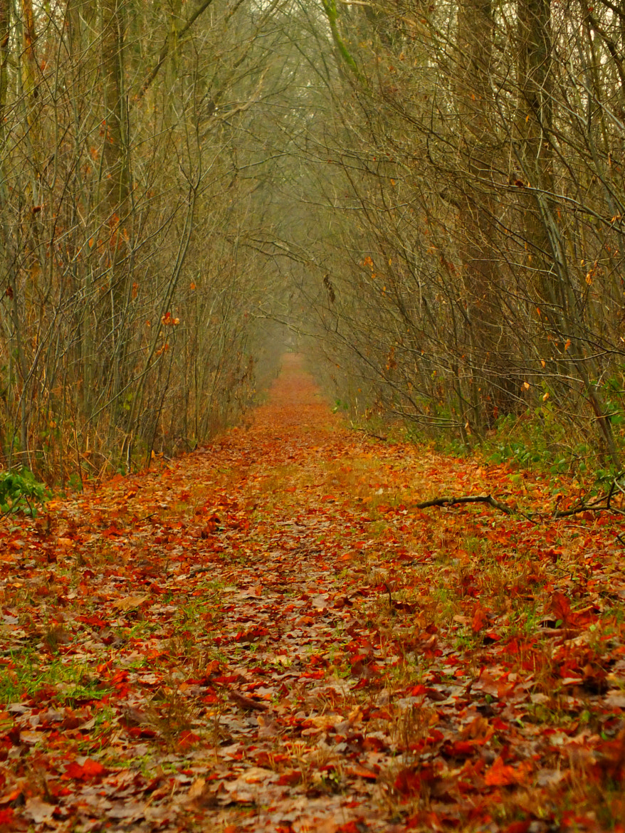 Photograph The neverending road by Branko Minnart on 500px