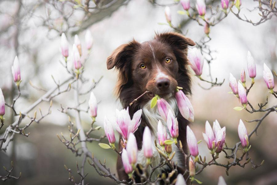 Maybe spring?, автор — Iza Łysoń на 500px.com