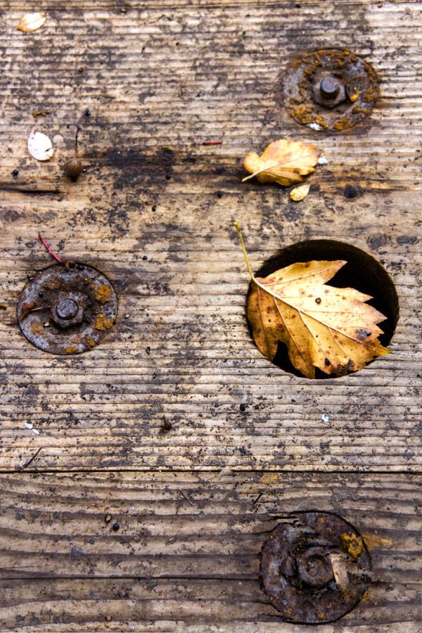 Les cercles (the circles) de Christine Druesne sur 500px.com