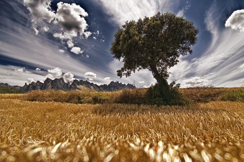 Photograph Camino hacia Montserrat  by Jose Luis Mieza on 500px