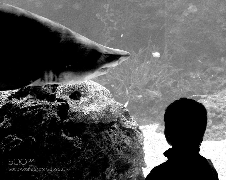 Photograph shark & child by asprokoraki on 500px