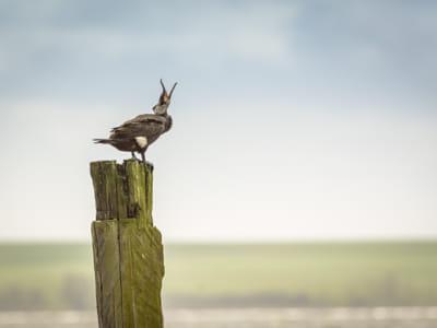 Call the Cormorant