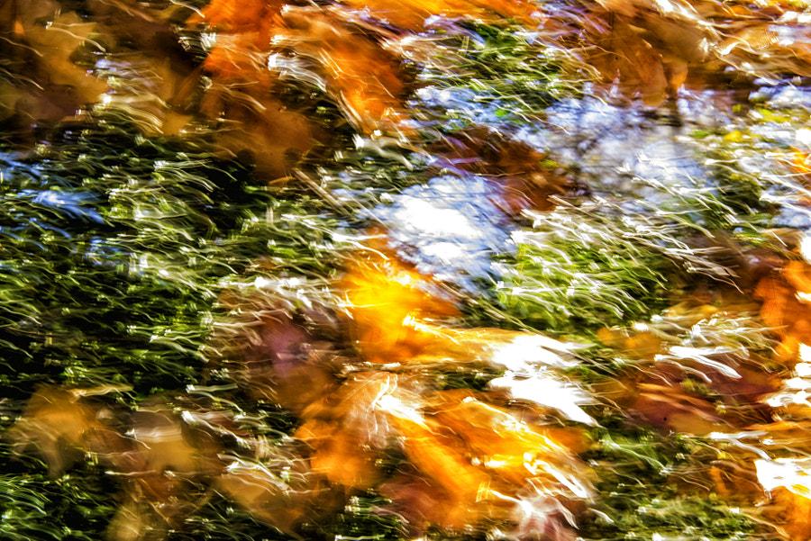 Autumn Motion #6