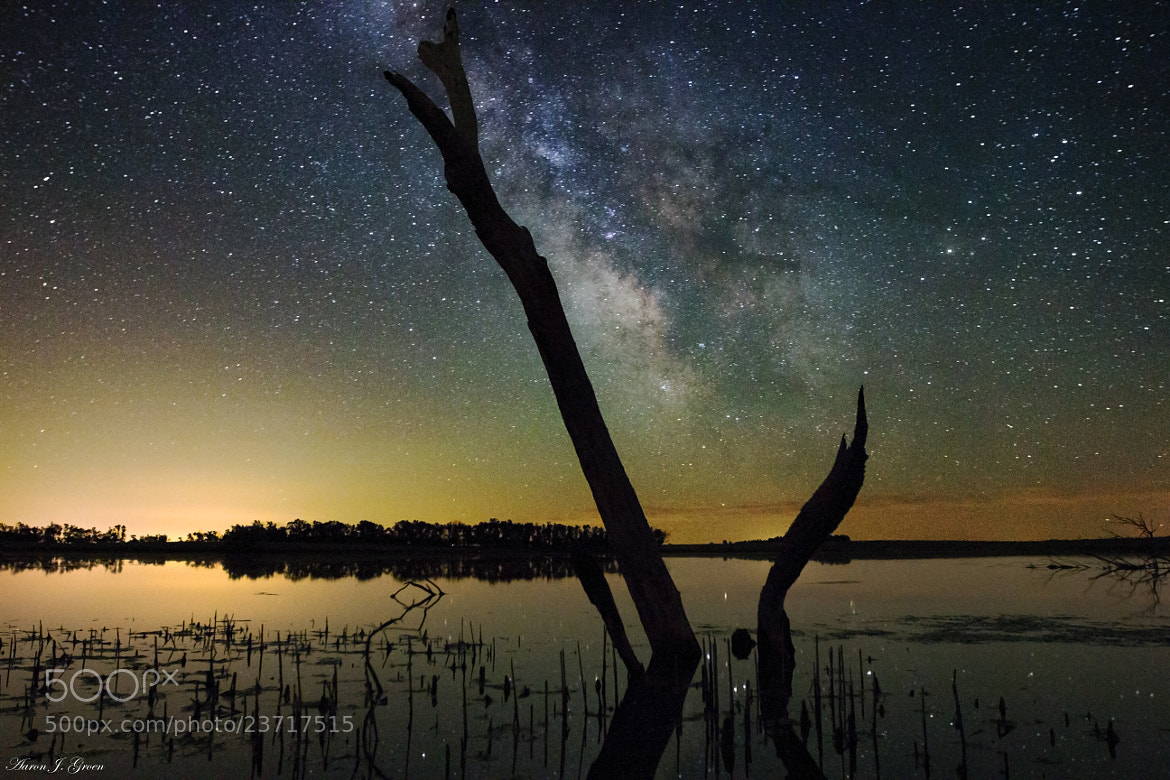 Photograph Milky Way Tree by Aaron J. Groen on 500px